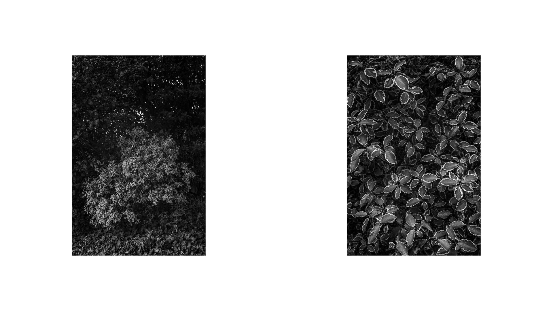 Like an Unnamed Titles Photographie Nadim Zeraïa-28
