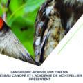 Nos Films, société de production vidéo à Montpellier. Vidéaste